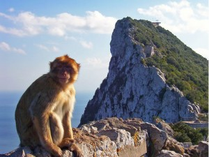 Monkey on Gibraltar