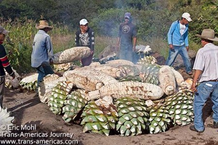 Mezcal_Cooking-Agave_big-pile